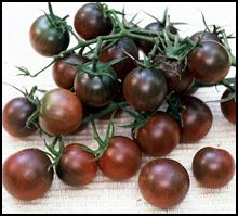 Click to enlarge Black Cherry Heirloom Cherry Tomato Seedling