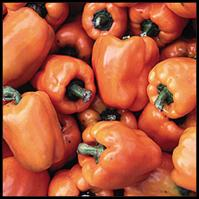Click to enlarge Orange Bell Heirloom Pepper Seedling