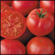 Click to enlarge Redfield Beauty Heirloom Tomato Seedling