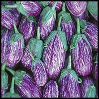 Click to enlarge Listada de Gardia Heirloom Eggplant Seedling