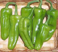 Click to enlarge Italian Pepperoncini Hot Pepper Seedling