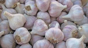 Click to enlarge German Extra Hardy Organic Garlic Bundle