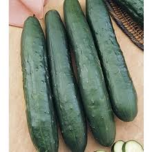 Click to enlarge Cucumber