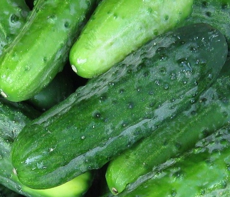 Click to enlarge Pickling Cucumbers