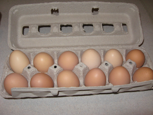 Click to enlarge Dozen Pasture Raised Brown Eggs fed Non-GMO Feed (Medium)