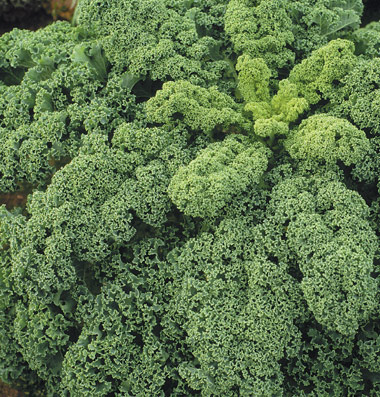 Click to enlarge Kale - curly
