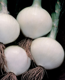 Click to enlarge Onions - white