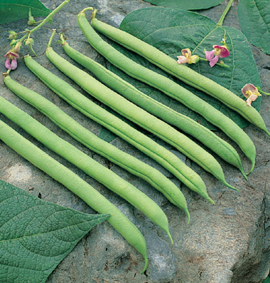 Click to enlarge Certified Naturally Grown Green Beans