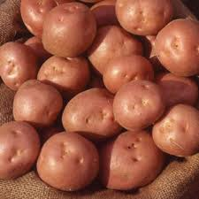 Click to enlarge Certified Naturally Grown New Red Potatoes