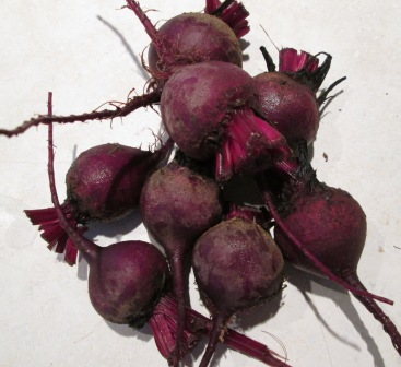 Click to enlarge Red Beets without tops