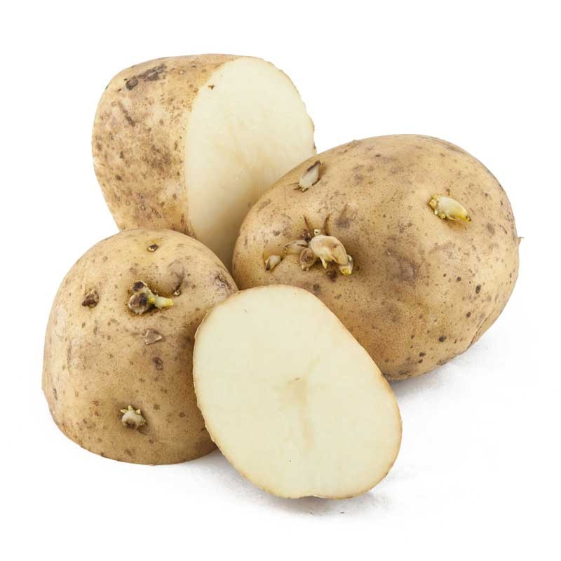 Click to enlarge Certified Naturally Grown Kennebec Potatoes
