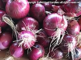 Click to enlarge Certified Organic Red Onion