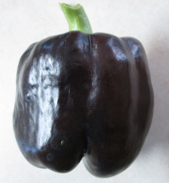 Click to enlarge Purple Beauty Sweet Pepper