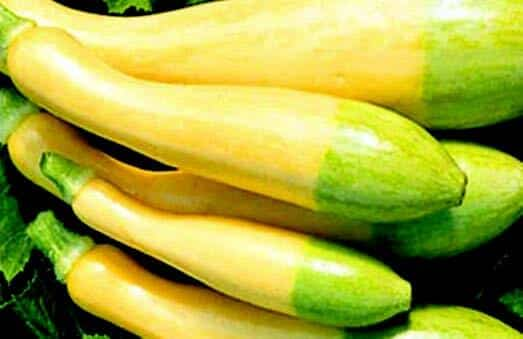 Click to enlarge Summer Squash- yellow