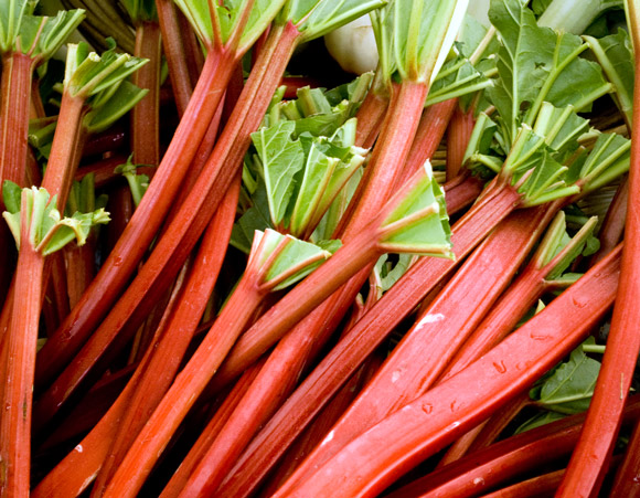 Click to enlarge Rhubarb Bunches, 1.5 lb bags