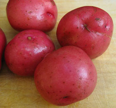 Click to enlarge Red Norland Potatoes