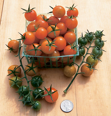 Click to enlarge Certified Naturally Grown Cherry Tomatoes