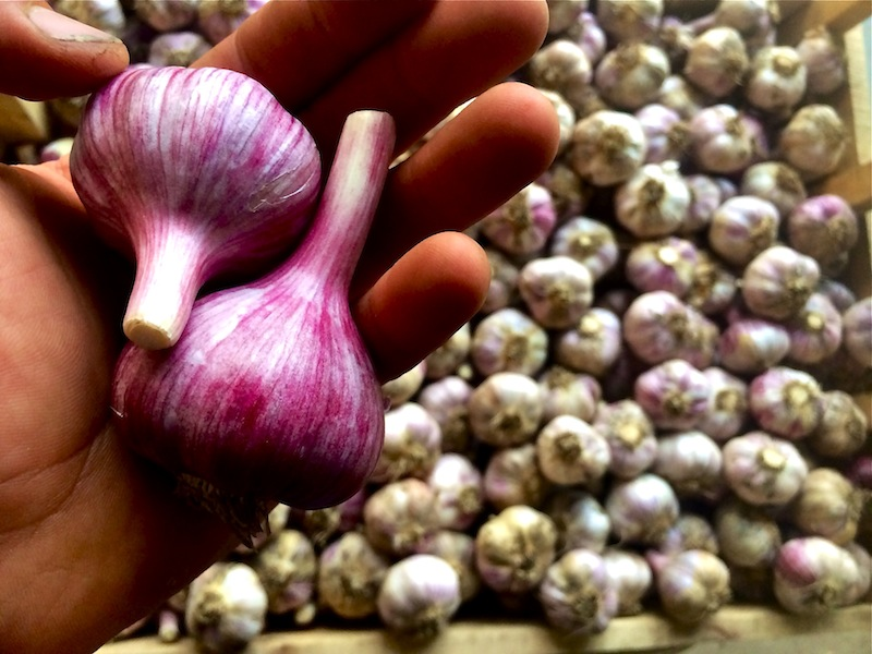 Click to enlarge Hardneck Garlic