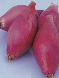 Click to enlarge Torpea Onion, Specialty- 2 lb. bag