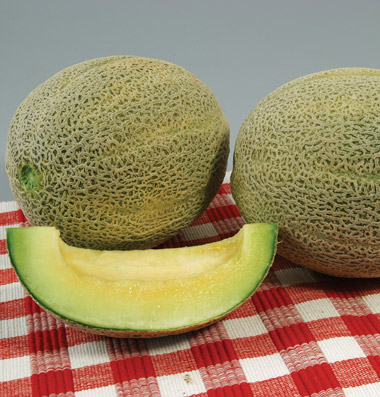 Click to enlarge Muskmelon - Edens Gem