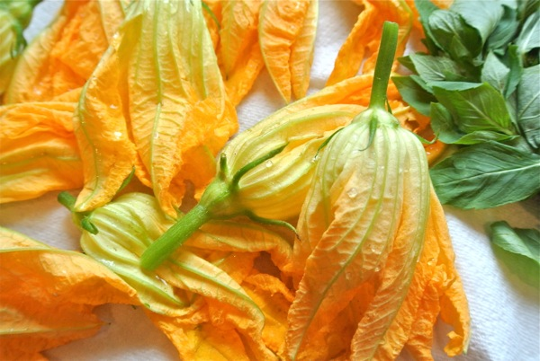 Click to enlarge Squash Blossoms