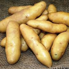 Click to enlarge Certified Naturally Grown Fingerling Potatoes