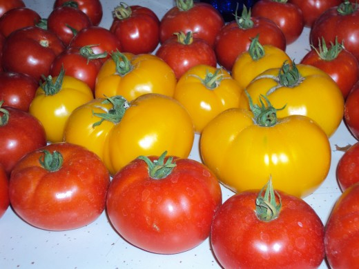 Click to enlarge Assorted Tomatoes for Canning, 20 lb box.