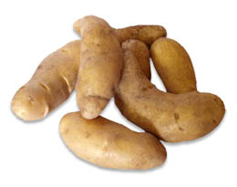 Click to enlarge Austrian Crescent Fingerling Potatoes