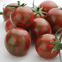 Click to enlarge Tomatoes: Cherry tomatoes( purple bumble  bee).