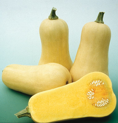 Click to enlarge Winter squash - butternut