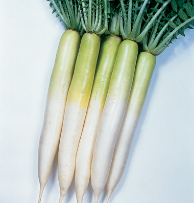 Click to enlarge Certified Naturally Grown Daikon Radishes