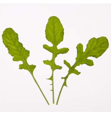 Click to enlarge Certified Naturally Grown Arugula