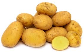 Click to enlarge German Butterball Potatoes