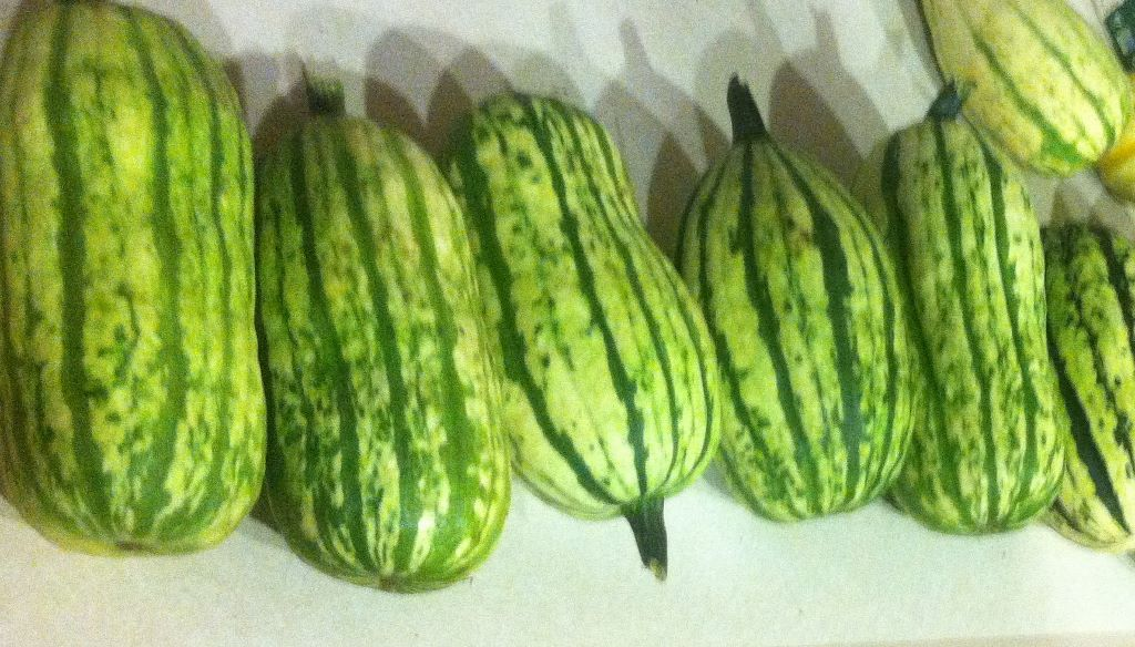 Click to enlarge Delicata Winter Squash