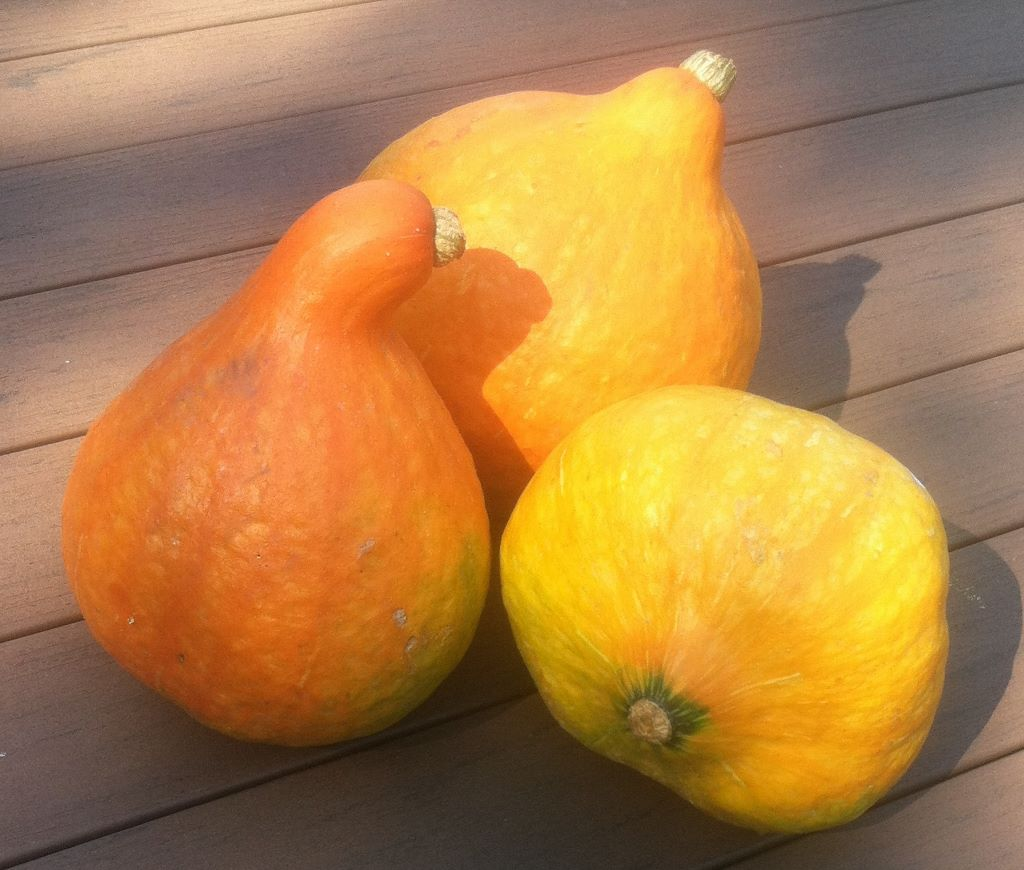 Click to enlarge Red Kuri Winter Squash - 9 lbs.