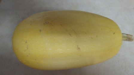 Click to enlarge Spaghetti Squash Large