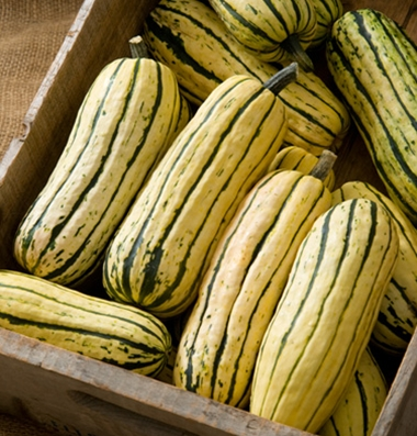 Click to enlarge Certified Naturally Grown Delicata Squash