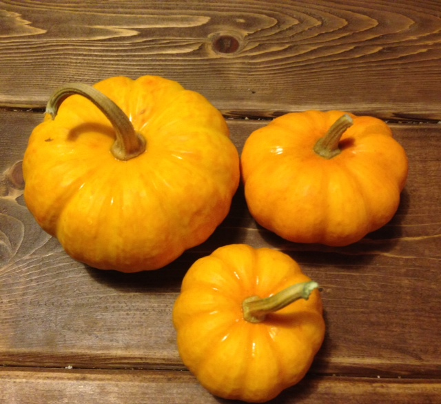Click to enlarge Jack Be Little Pumpkin Gourds
