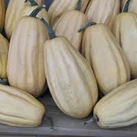 Click to enlarge Certified Naturally Grown Fordhook Acorn Squash