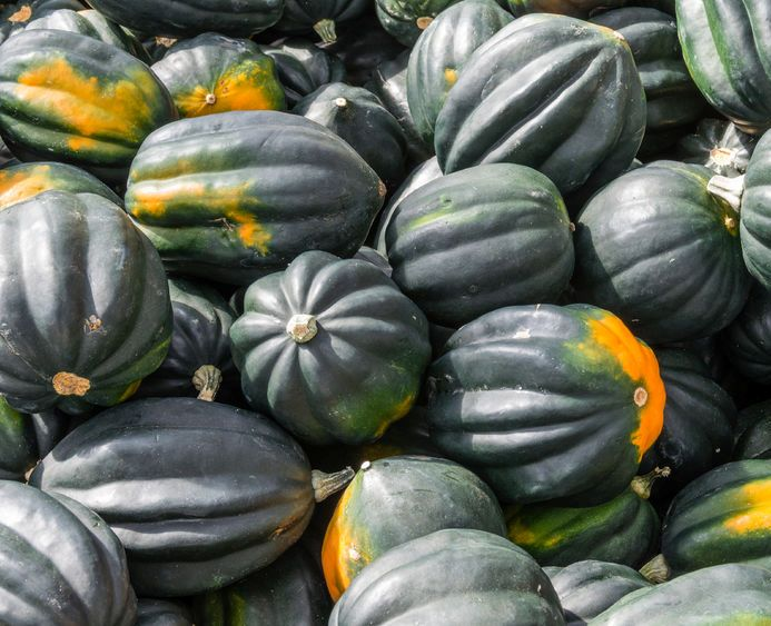 Click to enlarge Acorn Squash, Approximately 1.5 lbs