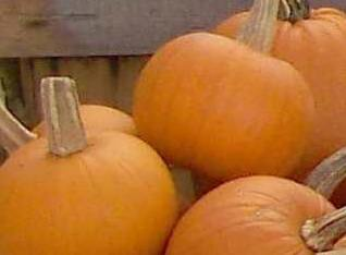 Click to enlarge SALE: Sugar Pie Pumpkins-Second Quality (Perfect for Baking)