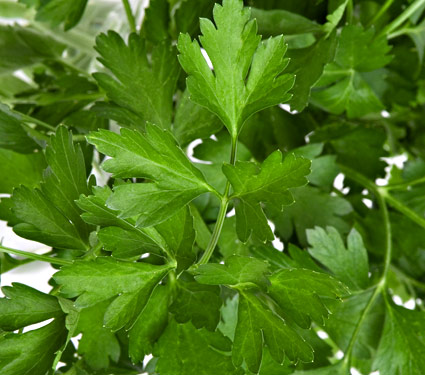 Click to enlarge Flat Leafed Parsley, 3 oz bunches