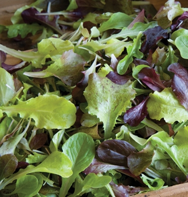 Click to enlarge Certified Organic Gourmet Lettuce Mix