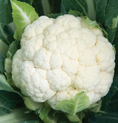 Click to enlarge Cauliflower