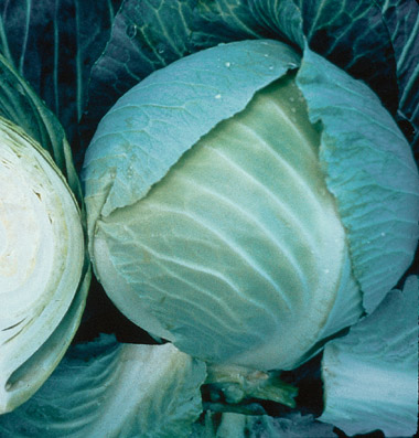 Click to enlarge Certified Naturally Grown Medium Sized Cabbages