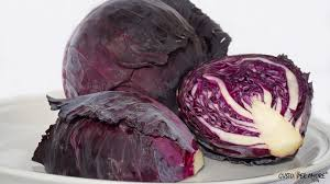 Click to enlarge Cabbage, Red