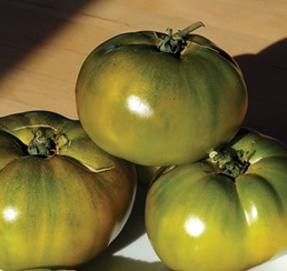 Click to enlarge Cherokee Green Heirloom Tomato Seedling