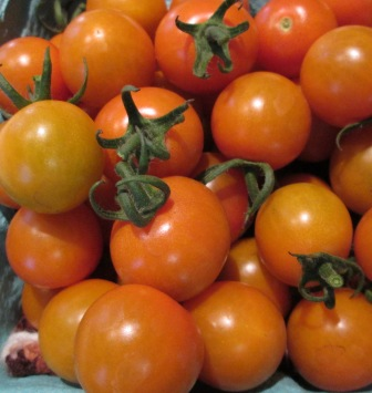 Click to enlarge Yellow Gold Cherry Tomatoes Sungold