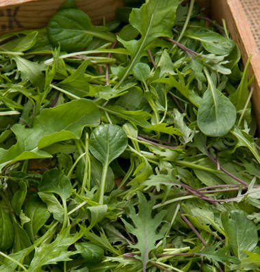 Click to enlarge Certified Naturally Grown Ovation Greens Mix