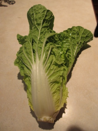 Click to enlarge Chinese Cabbage
